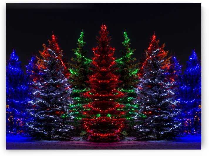 Colourful Christmas lights around several evergreen trees; Calgary, Alberta, Canada by PacificStock