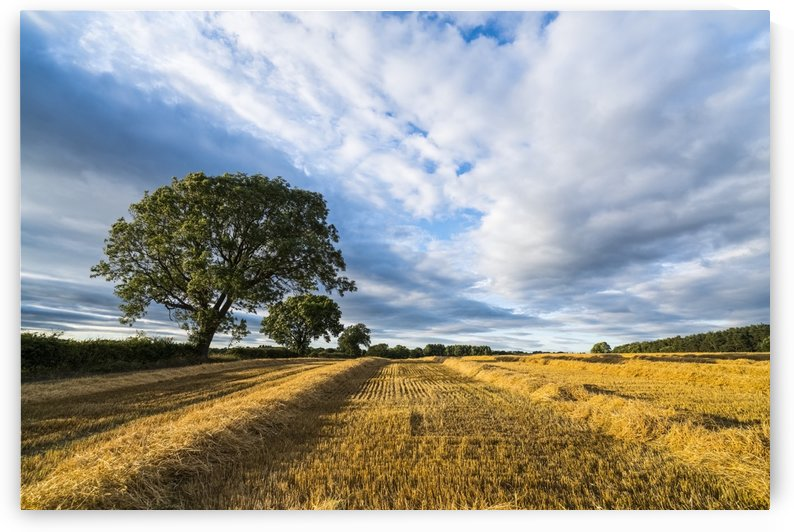 Sections of hay beside stubble on a cut field under a cloudy sky; Ravensworth, North Yorkshire, England by PacificStock