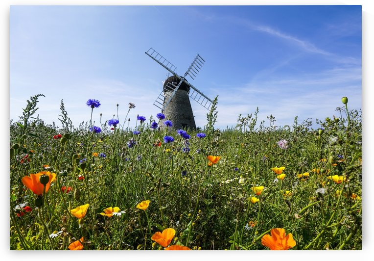 A windmill against a blue sky and cloud with a field of wildflowers in the foreground; Whitburn, Tyne and Wear, England by PacificStock