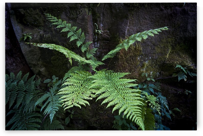 Close-up of a fern growing at the base of a tree; North Yorkshire, England by PacificStock