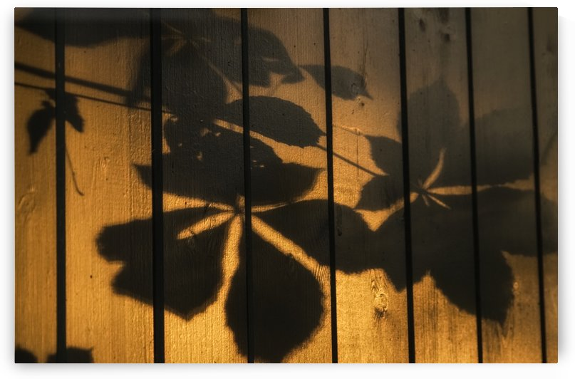 Shadows of tree branches and leaves cast on a wooden fence; Gateshead, Tyne and Wear, England by PacificStock