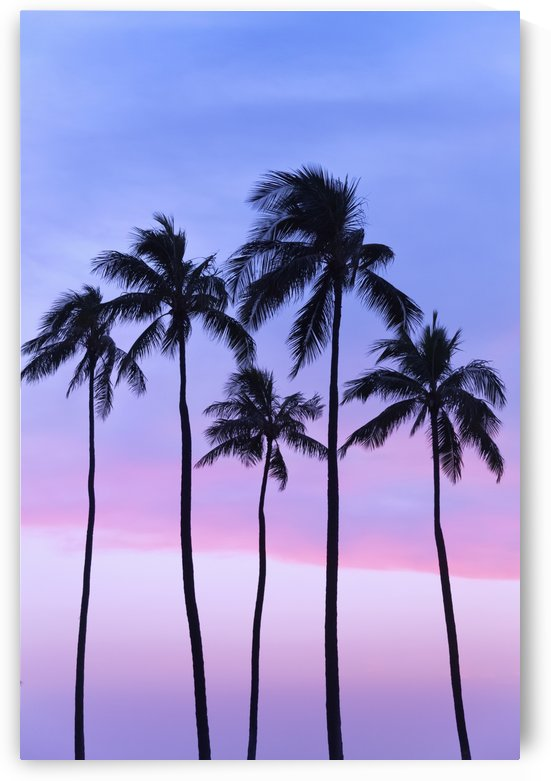 Five coconut palm trees in line with cotton candy sunset behind; Honolulu, Oahu, Hawaii, United States of America by PacificStock