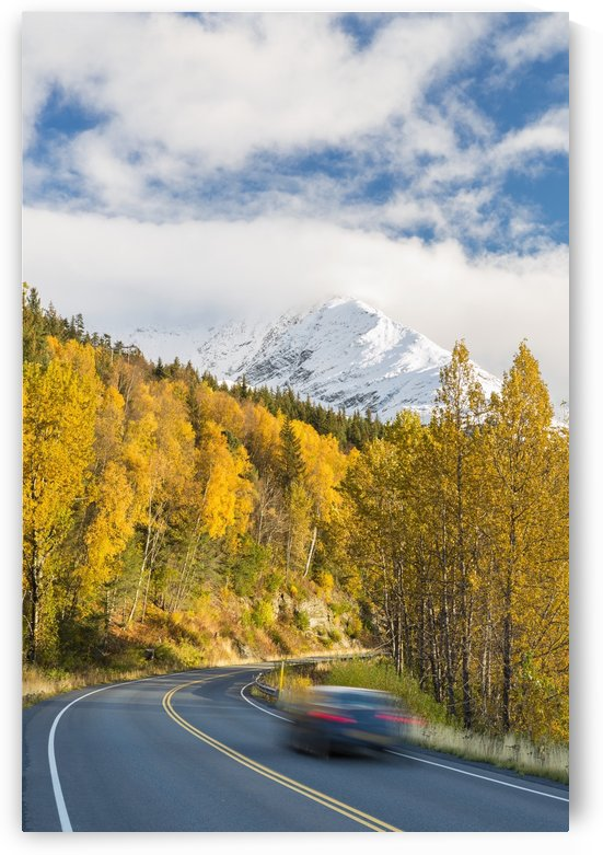 Snow-capped Kenai Mountains dwarf the Seward highway, trees covered in yellow leaves in autumn line the road, South-central Alaska; Seward, Alaska, United States of America by PacificStock