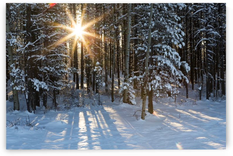 Sunburst coming through a snow covered forest; Kananaskis Country, Alberta, Canada by PacificStock