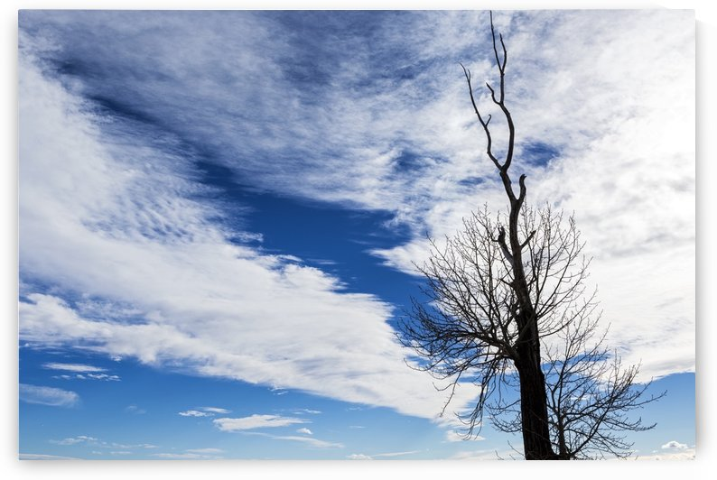 Silhouette of dead tree against a dramatic cloud formation with blue sky; Calgary, Alberta, Canada by PacificStock