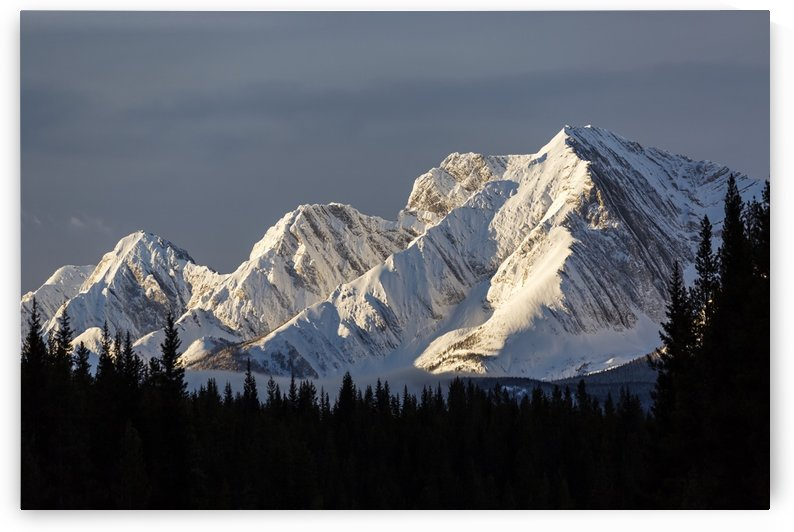 Snow covered mountains with early morning light, silhouetted forest in the foreground, blue sky and clouds; Kananaskis Country, Alberta, Canada by PacificStock