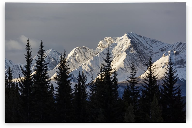 Snow covered mountains with early morning light, silhouetted forest in the foreground; Kananaskis Country, Alberta, Canada by PacificStock