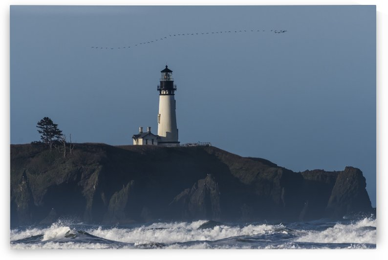 Cormorants (Phalacrocoracidae) fly over Yaquina Head Lighthouse on the Oregon Coast; Newport, Oregon, United States of America by PacificStock