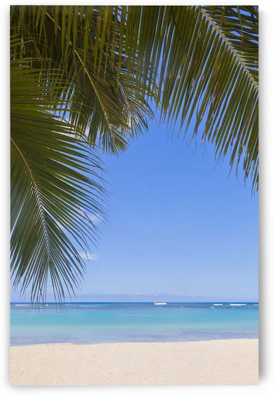 Beautiful clear day on a white sandy beach with coconut palm tree fronds hanging above; Honolulu, Oahu, Hawaii, United States of America by PacificStock