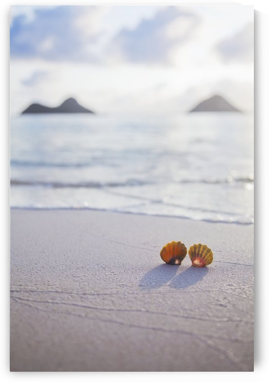 A set of two rare Hawaiian Sunrise Scallop Seashells, also known as Pecten Langfordi, in the sand at Lanikai beach, with Mokulua islands in background; Honolulu, Oahu, Hawaii, United States of America by PacificStock