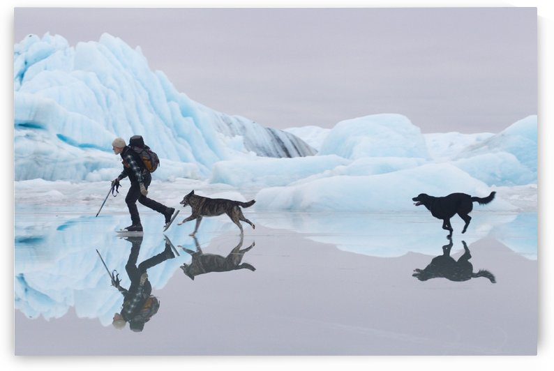 Man Ice Skating At Sheridan Glacier With Two Dogs Reflecting In Thin Layer Of Water On Ice And Icebergs In The Background, Cordova, Southcentral Alaska, Winter by PacificStock