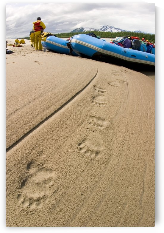 Brown Bear Tracks In The Sand In The Foreground As Rafters Bring Raft To Shore On The Lower Copper River Alaska Southcentral Summer by PacificStock