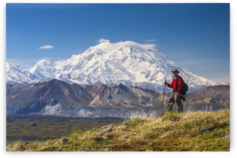 Hiker on a hillside in front of Mt. McKinley and Muldrow Glacier, Denali National Park, Interior Alaska, summer by PacificStock