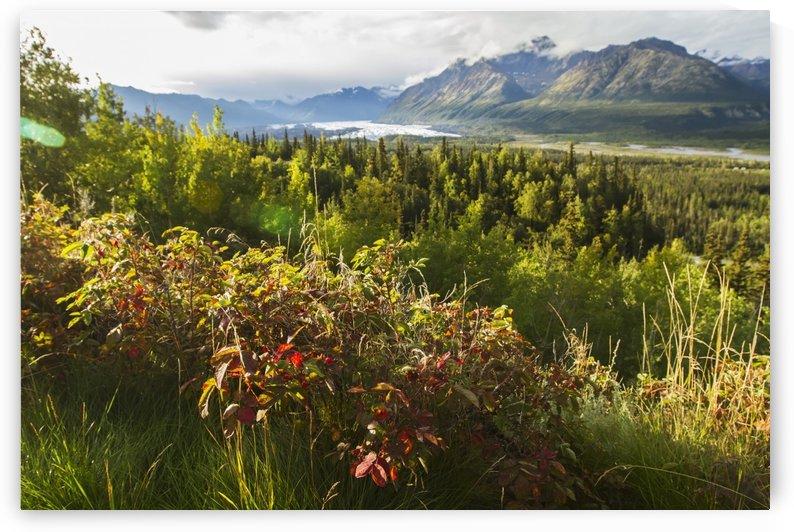 Matanuska Glacier, viewed from Glenn Highway near Sheep Mountain; Alaska, United States of America by PacificStock