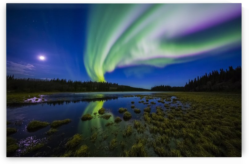 The aurora borealis competes against the moon in the night sky above a partially-thawed beaver pond in the spring; Alaska, United States of America by PacificStock