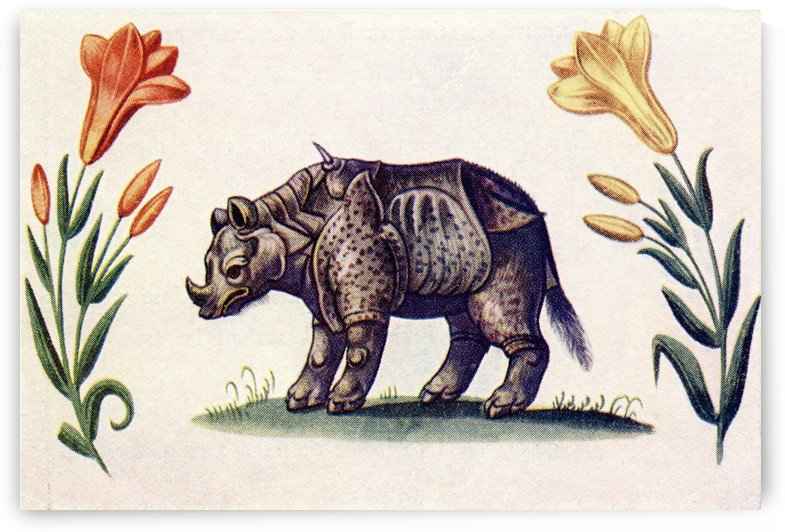 Rhinoceros.  After an illustration from The Livre d'Amis of Marguerite de Valois in The Illustrated London News, Christmas Number, 1933. by PacificStock