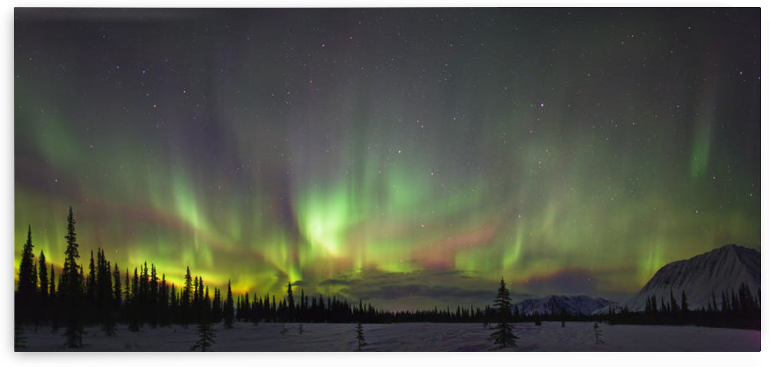 View Of Northern Lights And Spruce Trees In Broad Pass, Southcentral Alaska, Winter by PacificStock