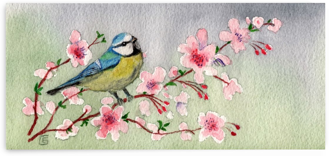 Blue Tit Bird On Cherry Blossom Tree by Joy of Life