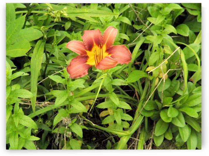 Oranger Lilly 4 by Arizona Photos by Jym