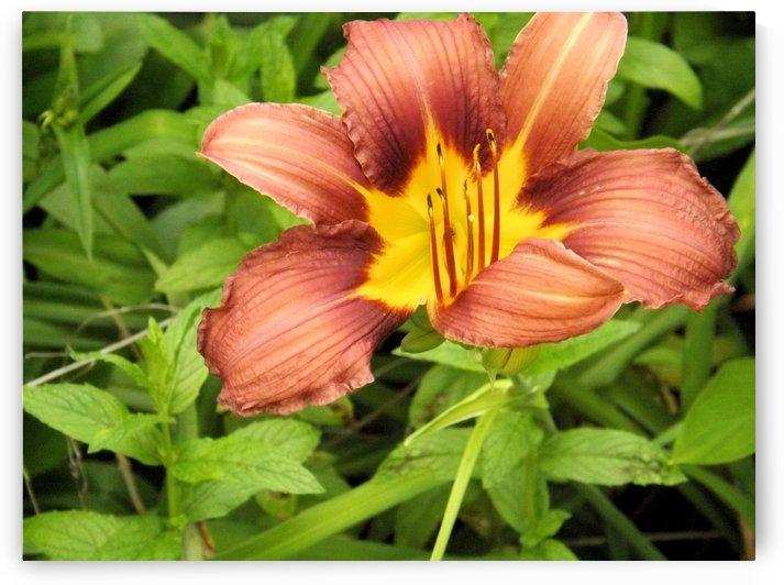 Oranger Lilly 3 by Arizona Photos by Jym