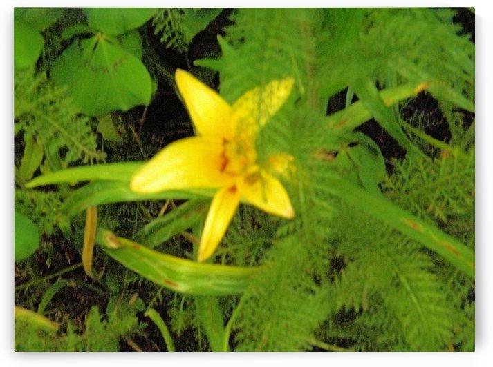 Yellow Flower by Arizona Photos by Jym