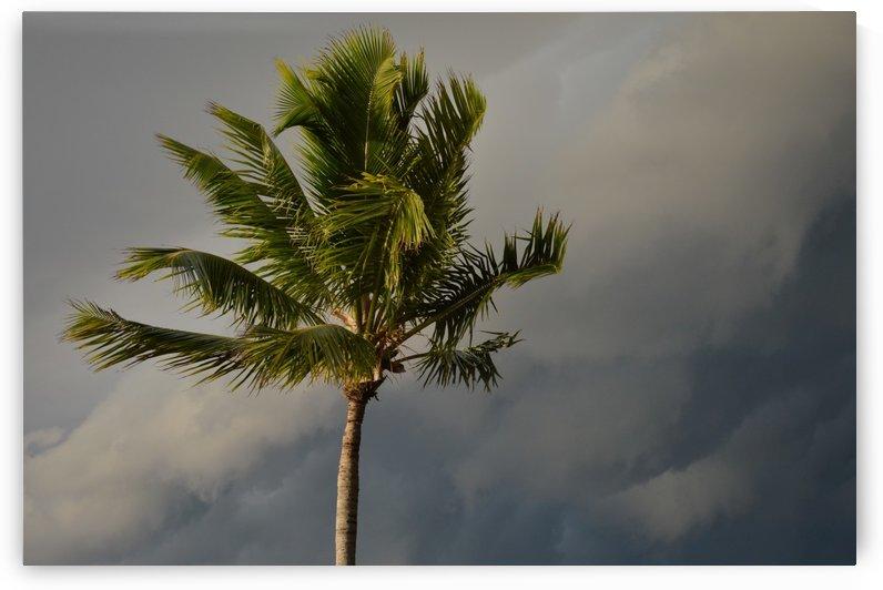 Palm Tree by Digitalu Photography