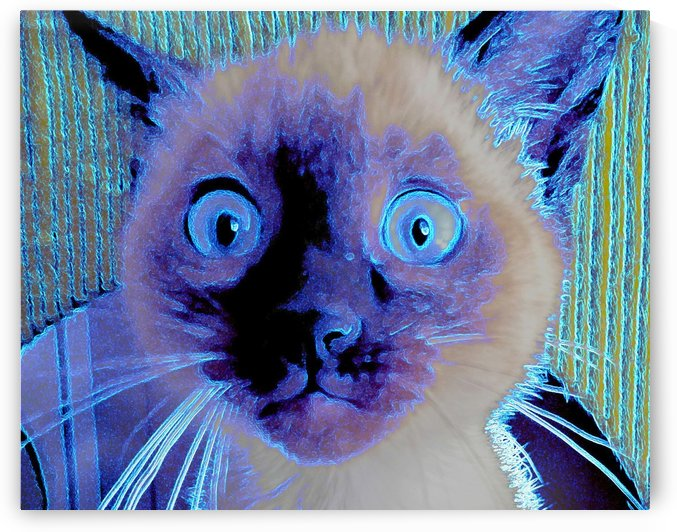 electric kitty by Kim Adams