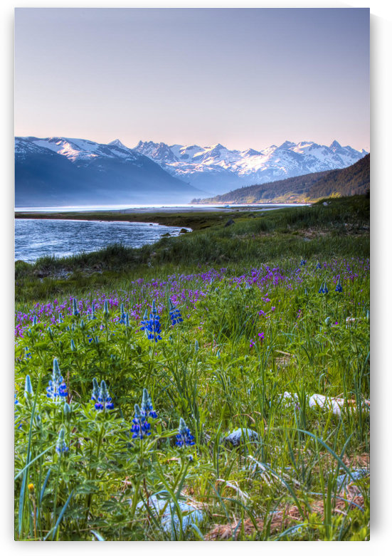 Field Of Wildflowers Near Haines, Southeast Alaska, Summer, Hdr Image by PacificStock