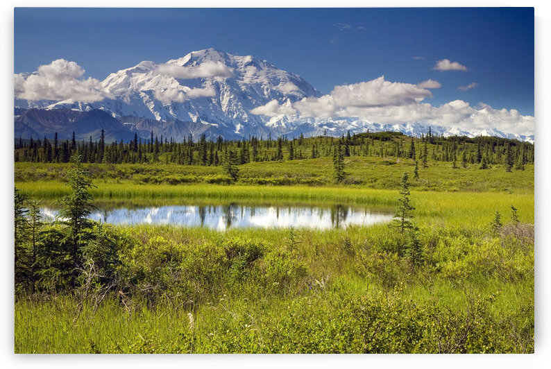 Mt.Mckinley And The Alaska Range With Kettle Pond In Foreground As Seen From Inside Denali National Park Alaska Summer by PacificStock