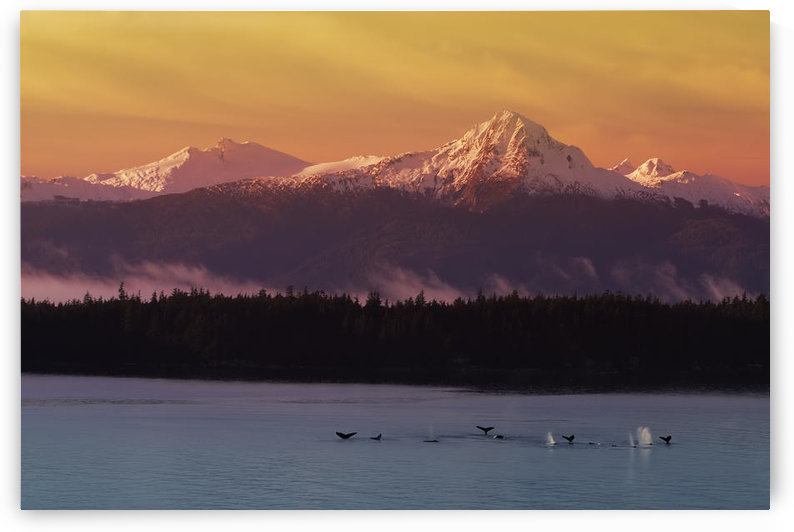Whale Tails In Southeast Below Chilkat Mtns Digital Composite by PacificStock