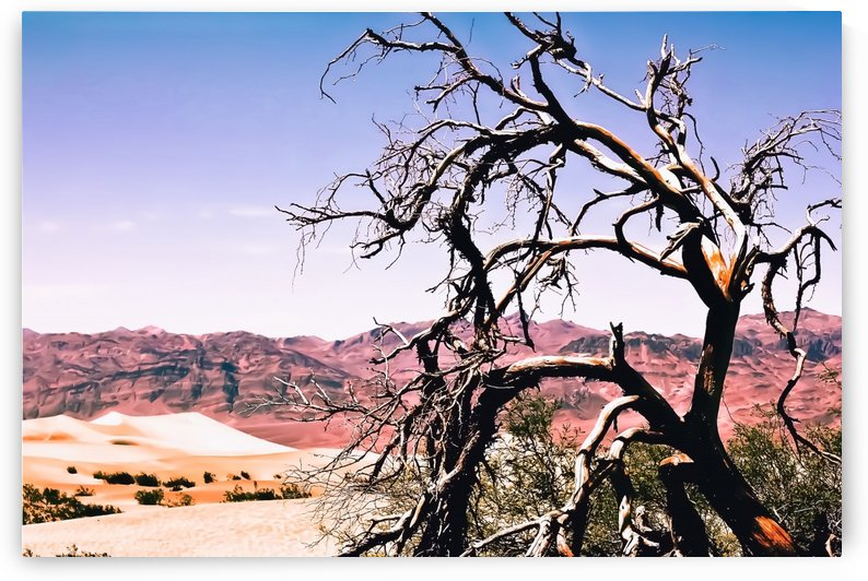 tree in the desert with mountain and blue sky in summer at Death Valley national park, USA by TimmyLA