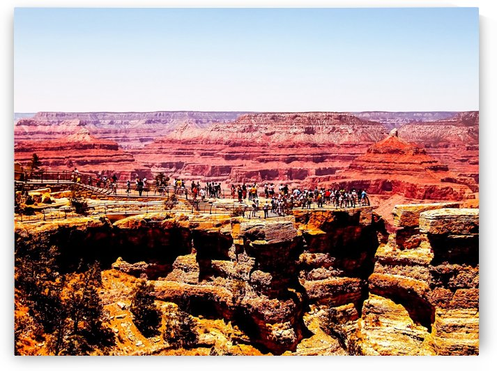 Desert in summer at Grand Canyon national park, USA by TimmyLA
