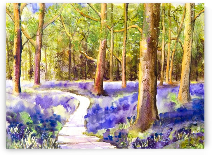 Bluebell Wood  by Hammond Fine Art