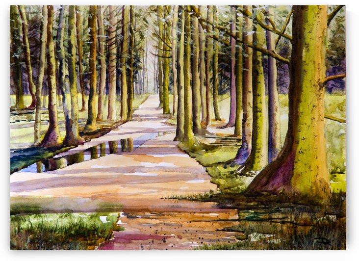 Woodland Glade  by DHWebbArt