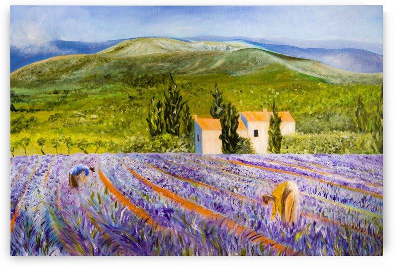Lavender Harvest in Provence, France by DHWebbArt