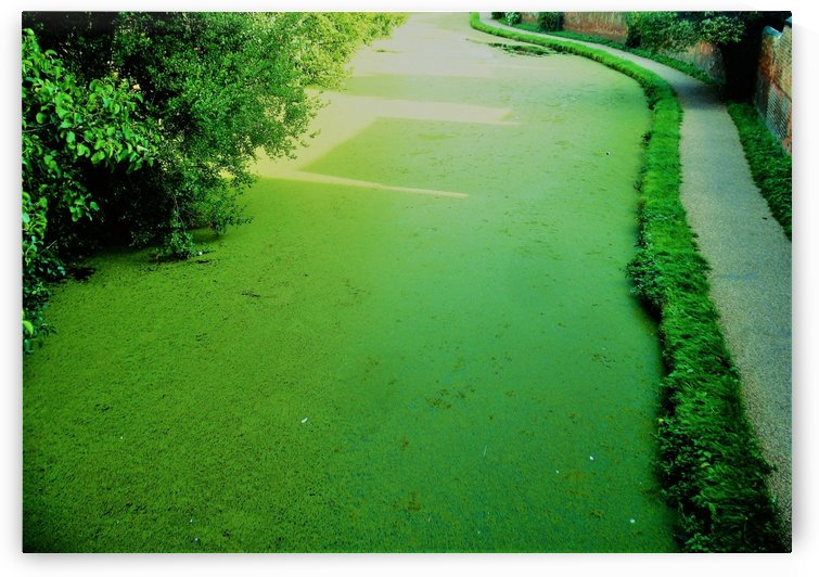 Green canal by Andy Jamieson