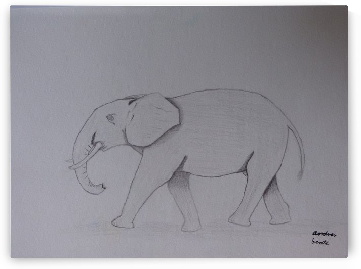 Elephant by Andres Beate