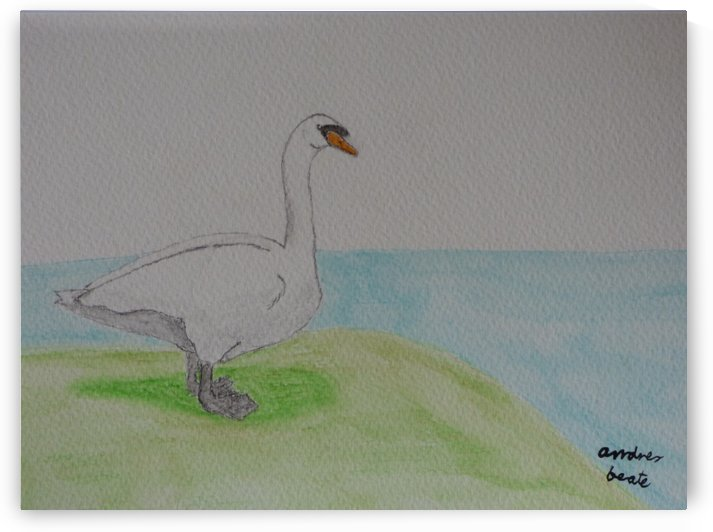 Swan  by Andres Beate