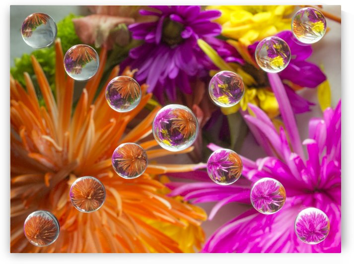 FLOWERS REFRACTION 18 by PJ Lalli