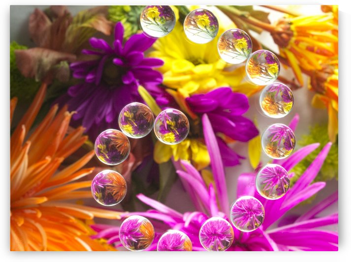 FLOWERS REFRACTION 13 by PJ Lalli