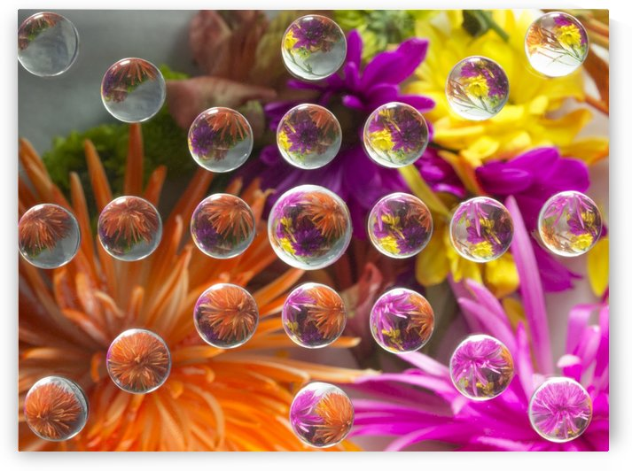 FLOWERS REFRACTION 17 by PJ Lalli
