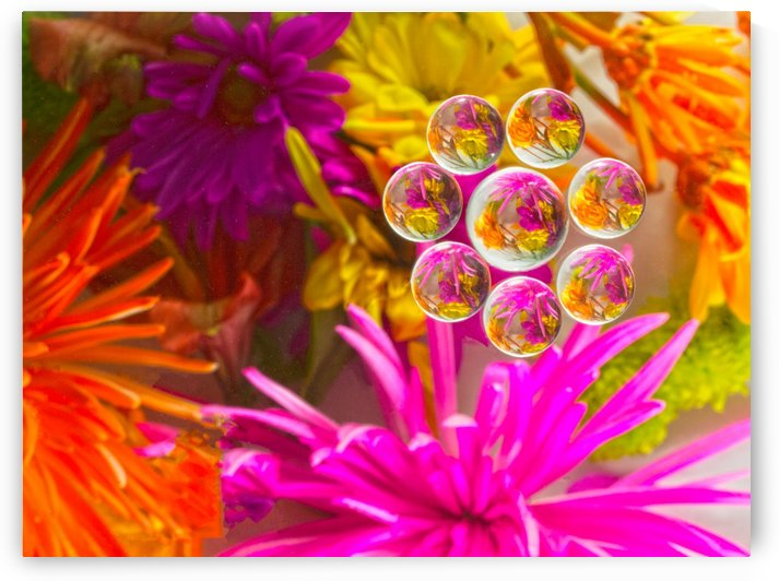 FLOWERS REFRACTION 12 by PJ Lalli