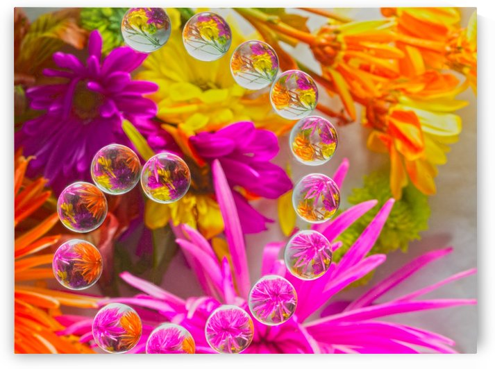 FLOWERS REFRACTION 15 by PJ Lalli
