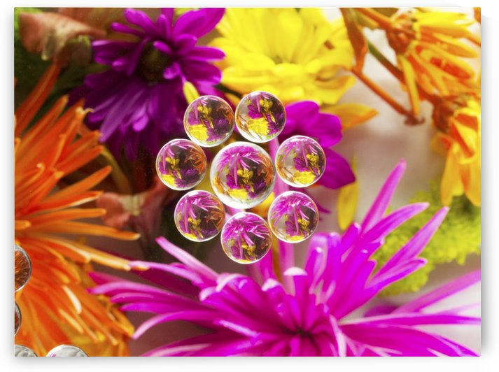 FLOWERS REFRACTION 9 by PJ Lalli