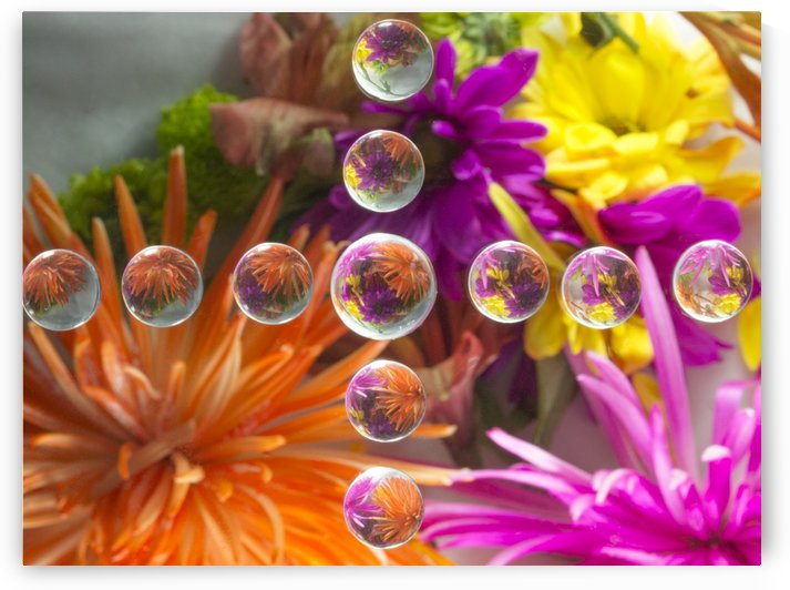 FLOWERS REFRACTION 16 by PJ Lalli