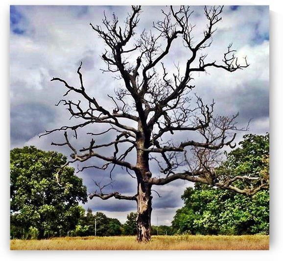 Old tree by Mariusz Wojcik