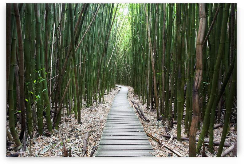 Hawaii, Maui, Kipahulu, Haleakala National Park, Trail through bamboo forest on the Pipiwai trail. by PacificStock