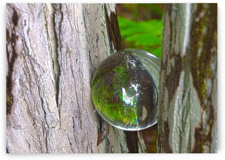 HDR CRYSTAL BALL IN A TREE FORK by PJ Lalli
