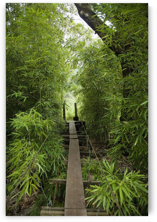 Hawaii, Maui, Waihee, A swinging Bridge into a lush green forest. by PacificStock