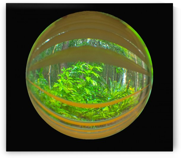 ISOLATED CRYSTAL BALL THROUGH BLINDS INTO A FOREST by PJ Lalli